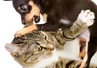 animale investito assicurazione