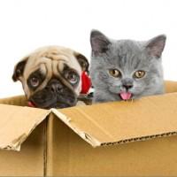 mutua cani gatti